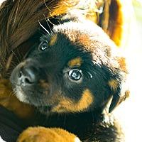 Adopt A Pet :: Dory - Muldrow, OK
