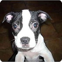 Adopt A Pet :: Bernard - fostered in CT - Adamsville, TN