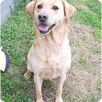 Adopt A Pet :: Tilley - Richmond, VA