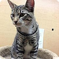 Adopt A Pet :: Alex - Monroe, GA