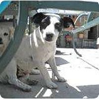 Adopt A Pet :: Blue - San Diego, CA
