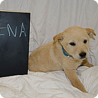 Adopt A Pet :: Nina - Westminster, CO