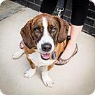 Adopt A Pet :: Rusty Wallace