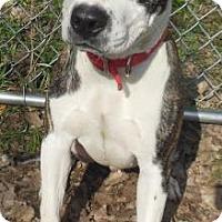 Adopt A Pet :: Dollar - Gary, IN