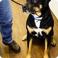 Adopt A Pet :: Mecca - Lake Odessa, MI