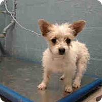 Adopt A Pet :: Wilson - Simi Valley, CA