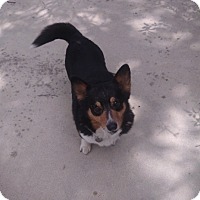 Adopt A Pet :: Claire - Simi Valley, CA