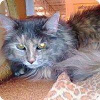 Adopt A Pet :: Jasmine - McHenry, IL