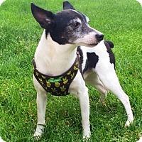 Adopt A Pet :: Spud - Davenport, IA