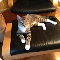 Adopt A Pet :: Alicia - Willingboro, NJ