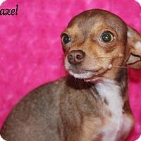 Adopt A Pet :: Hazel - Phelan, CA