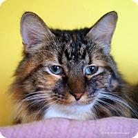 Adopt A Pet :: Christa - Tucson, AZ