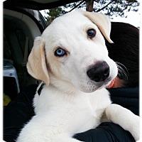 Adopt A Pet :: Orange - Broomfield, CO