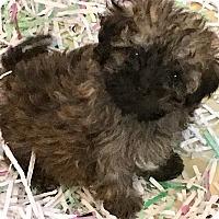 Adopt A Pet :: TIGER(OUR