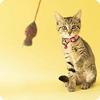 Adopt A Pet :: Espurr - Cincinnati, OH