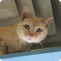Adopt A Pet :: Malley - Indianapolis, IN