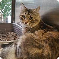 Adopt A Pet :: Rosy - Chambersburg, PA