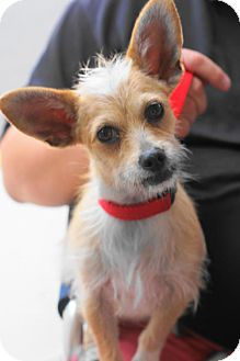Terrier (Unknown Type, Medium) Mix Dog for adoption in Holly Springs, North Carolina - Boo Boo