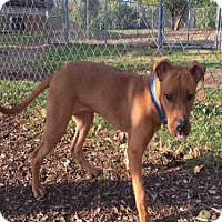 Adopt A Pet :: HUDSON - Urbana, IL