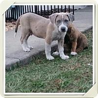 Adopt A Pet :: Gallagher - Weeki Wachee, FL