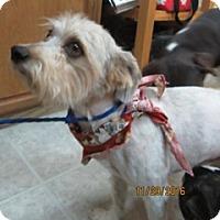 Adopt A Pet :: Abu - Von Ormy, TX
