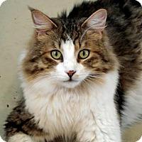 Adopt A Pet :: Barry Jay - Palo Cedro, CA