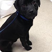 Adopt A Pet :: Duggan - Clarkesville, GA