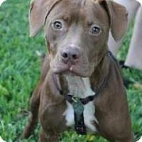 Adopt A Pet :: Pam - Justin, TX