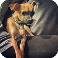 Adopt A Pet :: Dooley - Shawnee Mission, KS