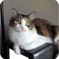 Adopt A Pet :: Mollie - Pasadena, CA