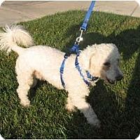 Adopt A Pet :: Sam - La Costa, CA