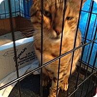 Adopt A Pet :: Rajah - Westfield, MA