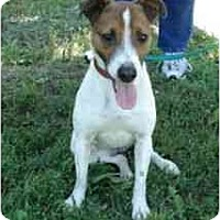 Adopt A Pet :: Millie #2 - Omaha, NE