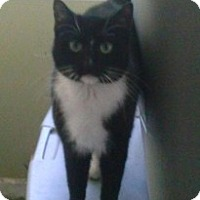 Adopt A Pet :: LUCKY - Hampton, VA
