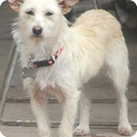 Adopt A Pet :: Nona-Meet Her!! - Norwalk, CT