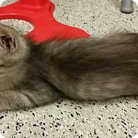 Adopt A Pet :: Smoke - Phoenix, AZ