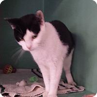 Adopt A Pet :: Oreo - Franklin, NH
