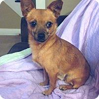 Adopt A Pet :: Toby - Davenport, IA