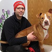 Adopt A Pet :: Glenn-Prison Dog - Elyria, OH