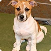 Adopt A Pet :: Gracy - Albany, NY