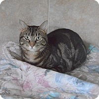 Adopt A Pet :: Thea - Mississauga, Ontario, ON