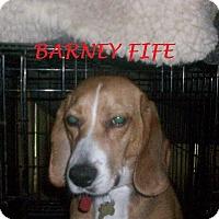 Adopt A Pet :: BARNEY FIFE - Ventnor City, NJ