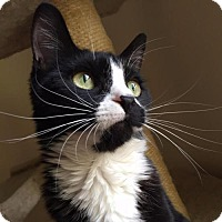 Adopt A Pet :: .Miriam - Ellicott City, MD