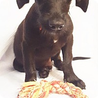 Adopt A Pet :: Otis (MD-James) - Newark, DE