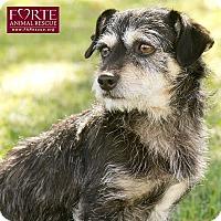 Adopt A Pet :: Norman - Marina del Rey, CA
