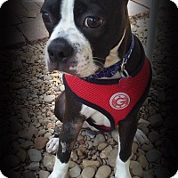 Adopt A Pet :: Ollie - Van Vleck, TX