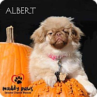 Adopt A Pet :: Albert - Council Bluffs, IA