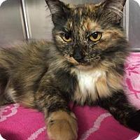 Adopt A Pet :: Fiona - Voorhees, NJ