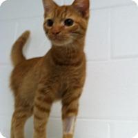 Adopt A Pet :: Dickins - Huntsville, AL