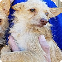 Adopt A Pet :: Wrigley - Fort Atkinson, WI